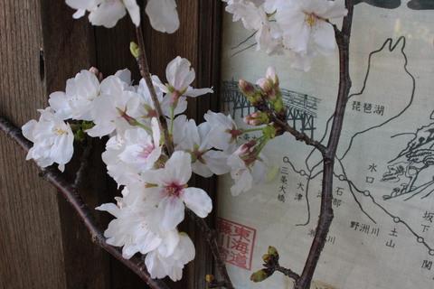 桜咲く。。。玄関先にさくらでお出迎え。